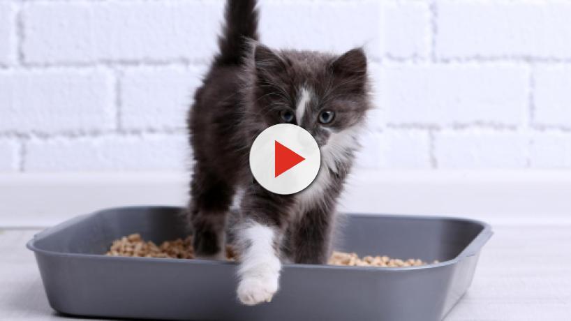 5 conseils pour empêcher un chat de faire pipi partout