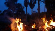 Queimadas na Amazônia disparam e se tornam preocupação mundial