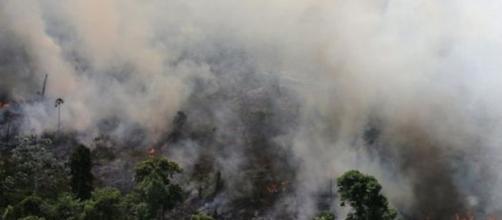 El incendio en el Amazonas pone en riesgo a miles de especies animales