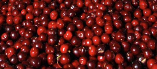Las cerezas son jugosas perlas rojas son muy saludables