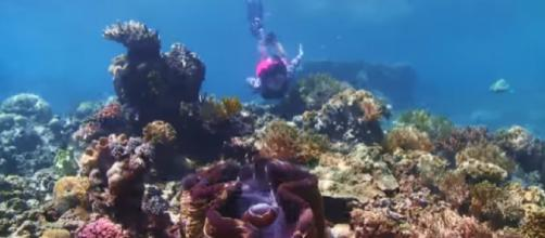 View of corals in Great Barrier Reef, Australia. [Image source - Queensland Australia / YouTube video]
