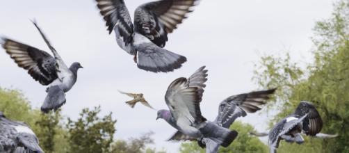 Los vecinos de Getafe hartos de las palomas