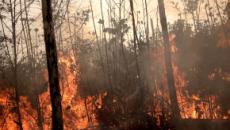 Los incendios en Europa serán peores que los del Amazonas, según Marc Castellnou