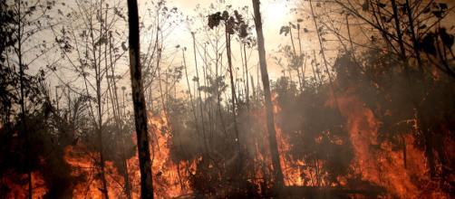 Los incendios en España serán peores que los del Amazonia