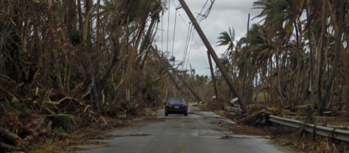 El huracán María en 2017 también se ensañó con la flora y la fauna de Puerto Rico. - elfaro.net