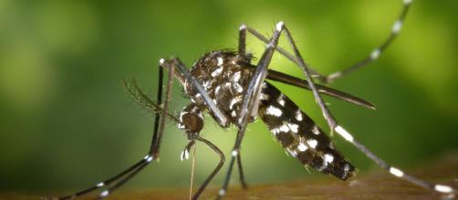 Multas de hasta 3.000 euros por tener focos de mosquito tigre.