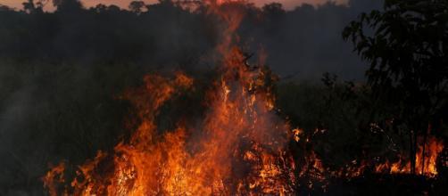 Os 50 investigados seriam responsáveis somente pelos incêndios ocorridos no Pará. (Arquivo Blasting News)