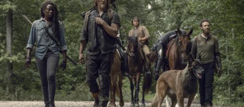 Dog, le chien de Daryl, accompagne les survivants depuis la saison 9 - fanpop.com