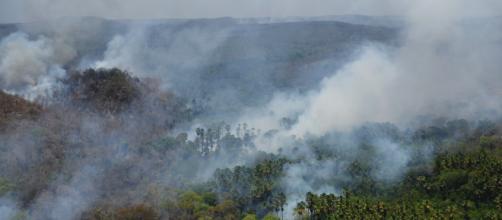 Incêndios na floresta amazônica repercutiram no mundo. (Arquivo Blasting News)