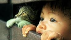 Langage corporel du chat: conseils et interprétations possibles