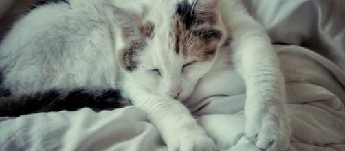 Nettoyer l'urine de chat sur les textiles | Truc de grand mere ... - pinterest.ca