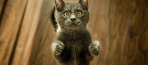 Payer son PV en offrant de la nourriture aux chats abandonnés - parismatch.be