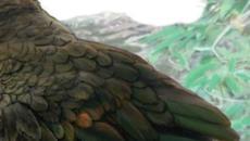 In Nuova Zelanda trovato il fossile di un pappagallo gigante vissuto 19 milioni di anni fa