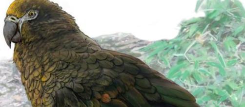 Il papagallo gigante vissuto 19 milioni di anni fa