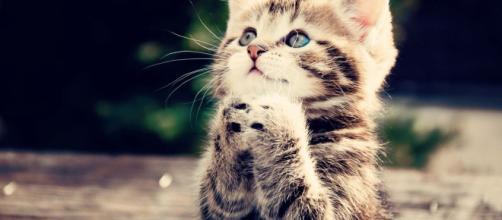 7 avantages d'avoir un chat selon la science