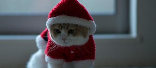chat rouge de Noël habillé HD fond d'écran télécharger - besthdwallpaper.com