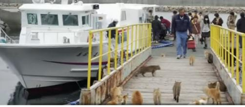 Japan's Cat Island. [Image source/- BBC News YouTube video]