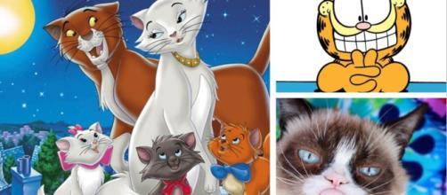 Top 8 des chats célèbres pour la journée internationale des chats
