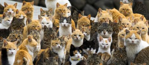 Vous avez aimé l'île aux chats au Japon? En voici 10 de plus ... - slate.fr