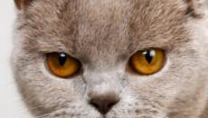 5 signes qui prouvent qu'un chat déteste son maître