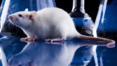 Cientistas brasileiros poderão usar pele humana em experimentos em vez de animais