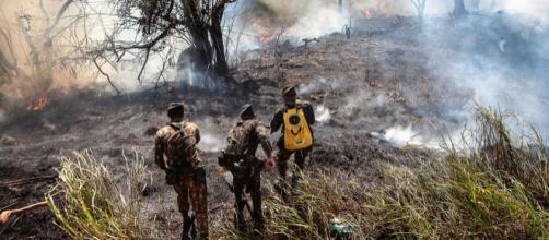 Governadores de nove estados não querem a interrupção da ajuda financeira da Europa para a Amazônia. (Arquivo Blasting News)