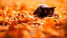 5 dangers qui guettent les chats en automne