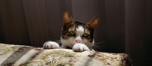 5 choses à faire pour que votre chat ne vous réveille pas la nuit. Credit : Immortal Shots/Pexels