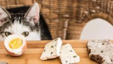 6 aliments toxiques pour un chat