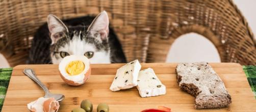 10 aliments dangereux pour les chats | Bulle Bleue - bullebleue.fr