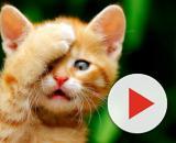 Télécharger 2560x1600 Chats humour chatons drôles 1450x1140 fond d ... - fondsecran.eu