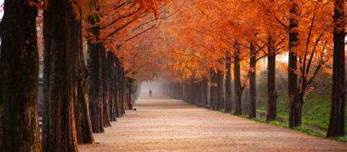 Oroscopo 23 settembre, equinozio d'autunno: nuovi progetti per Leone, difficoltà per Pesci