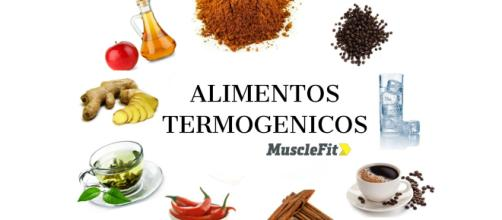 Que son los termogénicos? – MuscleFit - musclefit.com