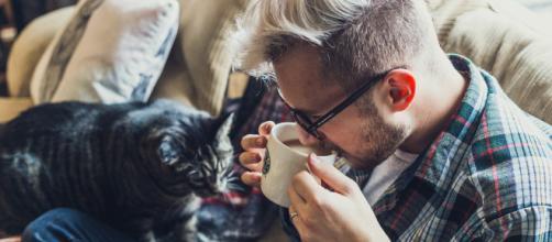 Adopter un chat rend heureux : 7 bonnes raisons de se lancer - dubonheuretdeslivres.com
