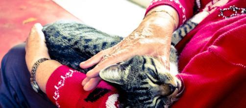 Le fusa del gatto fanno bene al cuore