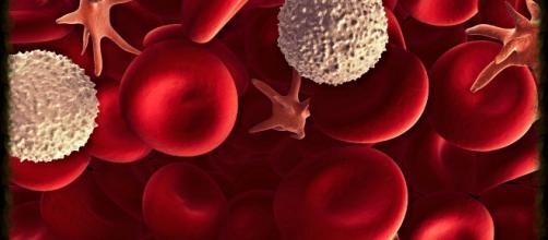 Los glóbulos blancos tienen una importante función inmunitaria. - tucuerpohumano.com