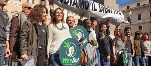 Legalizzazione cannabis: appello dei Radicali a M5S e Pd