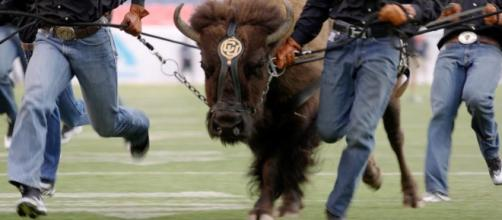 Colorado's mascot wants to avoid the use of the 'N' word [Image via The Denver Post/YouTube]