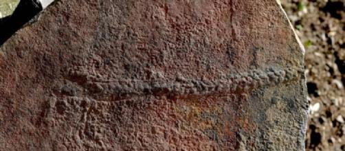 Le tracce del primo animale sulla terra