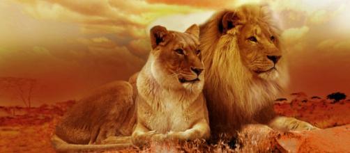 Oroscopo 9 settembre: sorprese in amore per Leone.