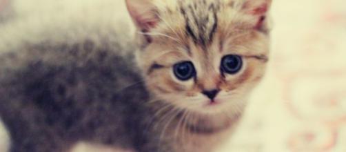 Brindisi, gatto seviziato ed ucciso con i petardi nella notte di Capodanno