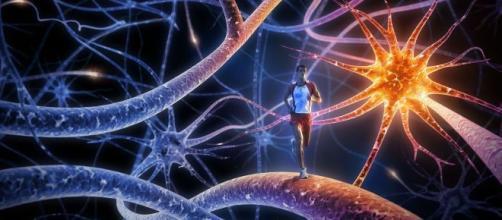 El Sistema Nervioso Neurovegetativo funciona con apoyo de las hormonas. - emaze.com