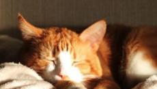 Dormir avec son chat aurait de nombreux avantages pour la santé