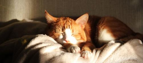 Quels sont les avantages de dormir avec son chat