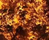 Australie : des incendies ravageurs - Credit: Capture d'écran/ Dailymotion