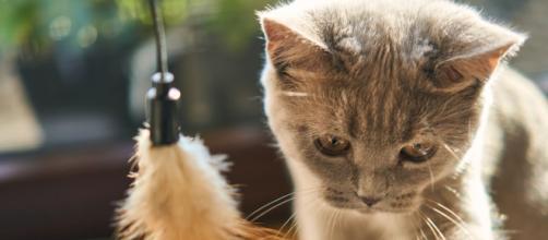 Chats comment interprètent-ils les bisous?