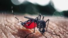 Ministério da Saúde alerta para surto de dengue no Nordeste, Espírito Santo e RJ