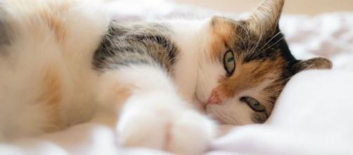 Chat voici pourquoi il vous réveille tous les matins à la même heure.