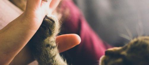 Le chat vous verrez comme sa propre mère