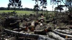 Desmatamento no Centro-Sul do Paraná é descoberto pela Polícia Ambiental